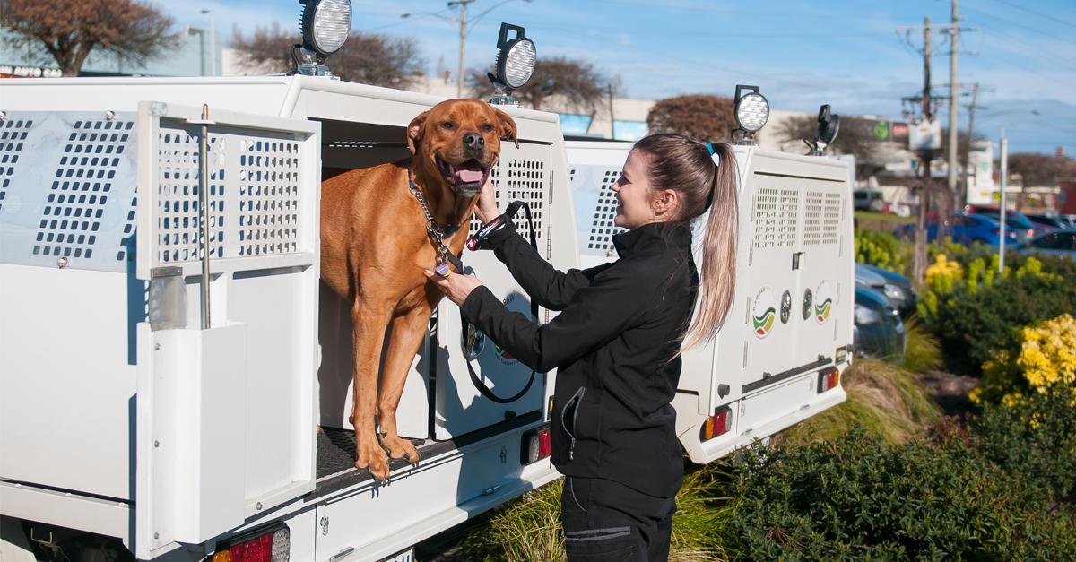 Domestic Animal Management Plan 2017-2021